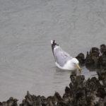zeehonden en zeevogels Breskens-002