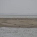 zeehonden en zeevogels Breskens-006