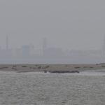 zeehonden en zeevogels Breskens-008