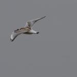zeehonden en zeevogels Breskens-023