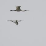 zeehonden en zeevogels Breskens-032