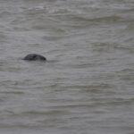 zeehonden en zeevogels Breskens-037